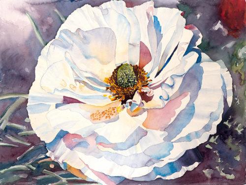white ranunculus, watercolor, 30 x 22.5 in., 1981